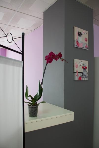 Detalle de Orquídea y cuadros