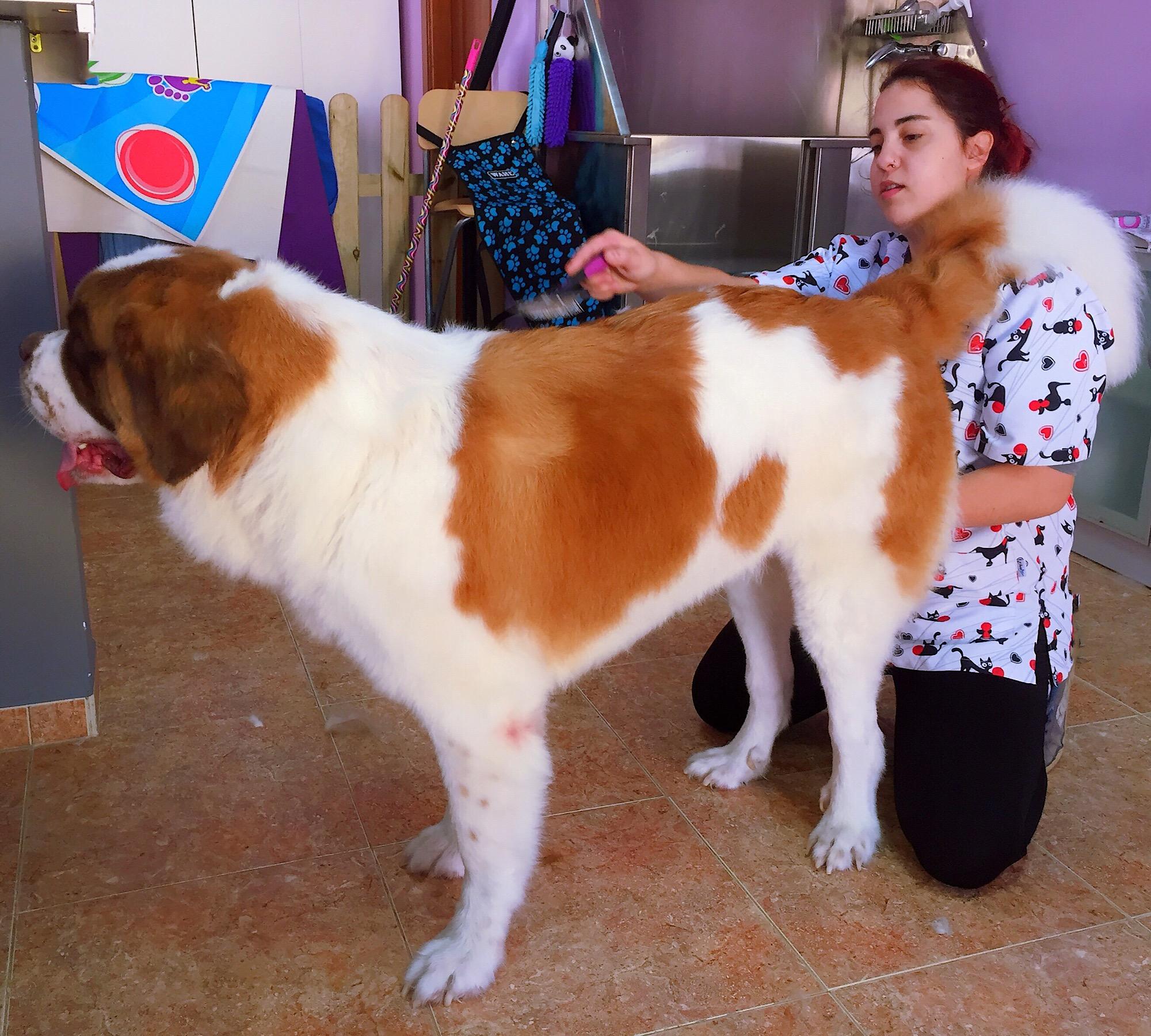 Noa en la Peluquería Canina Vivancos