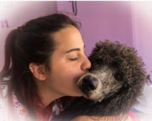 Peluquería canina caniche gigante